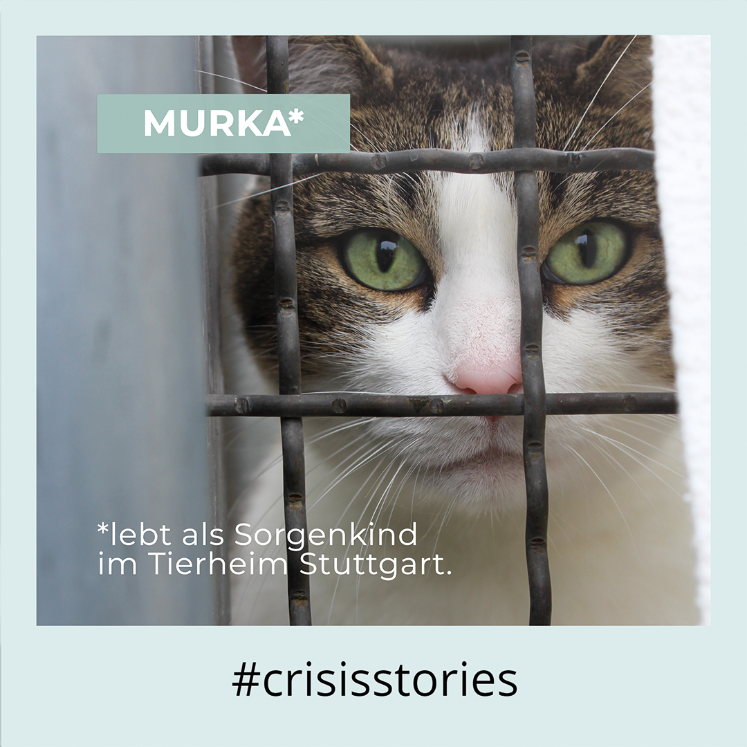 Post on Animal Shelters: The cat Murka lives as problem child in the animal shelter in Stuttgart.